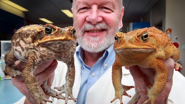 ศจ. Rick Shine กับคางคกแคนโทด จากสัตว์รบกวนไร้ค่าและสัตว์เศรษฐกิจ