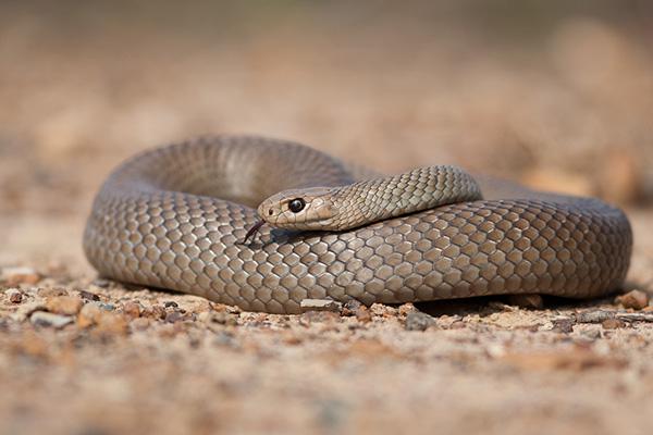 2015-11-12 snake3