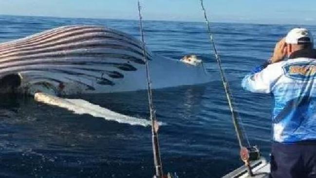 ขณะที่ร่างของวาฬเริ่มแฟบลงแล้ว : ภาพจากเฟสบุ๊คของนาย Mark Watkins