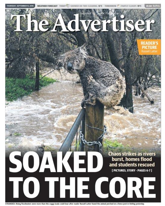 2016-10-03 ข่าวหน้า 1 Koala2