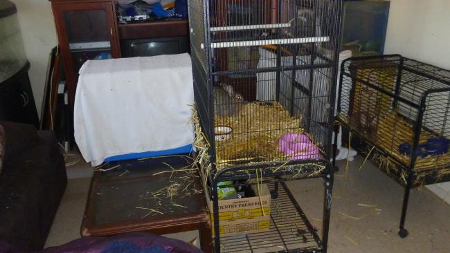สภาพกรงเลี้ยงสัตว์ที่ RSCPA บุกเข้าตรวจพบที่บ้านของสตรีสองคนในย่าน Elizabeth Down : ภาพจาก RSCPA