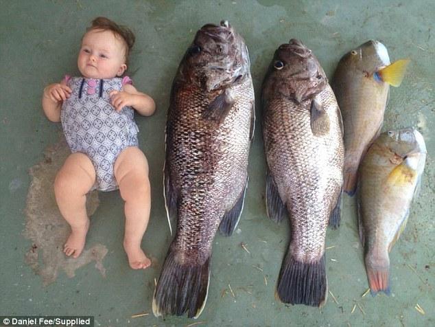 น้องเป้อร์ Harper กับปลาดูห์ฟิซ : ภาพจากนสพ. Daily Mail ต้นฉบับเฟสบุ๊คของนาย Matthew Fee